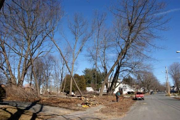 Treework 10-6