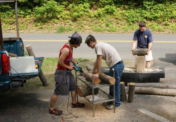 Innoculating logs with mushroom spawn